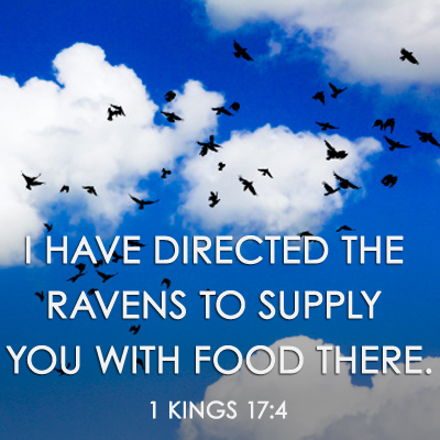 ravens-1-kings-17-4